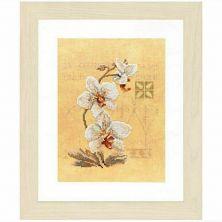 Kit punto de cruz orquídeas